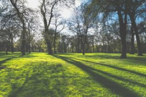Image of green grass and sunlight streaming through trees