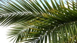 photo of palm leaves