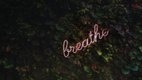 photo of green plants with the word breathe in front